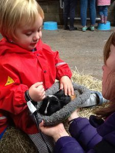 Meeting the Guinea Pigs