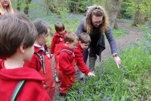 Nursery children point out bluebells with teacher in the woods