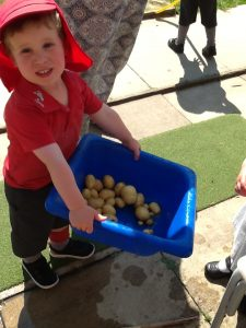 Nursery pupil carries bucket full of potatoes