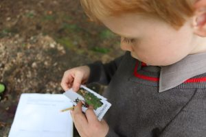 Picture of Ilkley Primary school pupil looking at a matching pair in outdoor card game