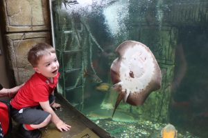 Ilkley Nursery child smiles at seeing a sting ray swim past at Tropical World